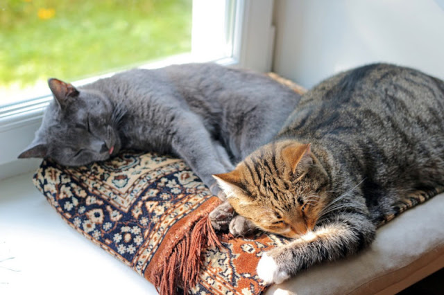 Why It Is So Important To Adopt Cats And Not To Buy