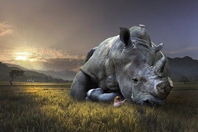 Faktor penyebab hilangnya keanekaragaman hayati, fakotr penyebab hilangnya keanekaragaman spesies endemik, faktor hilangnya spesies endemik, penyebab hilangnya hewan dan tumbuhan langka
