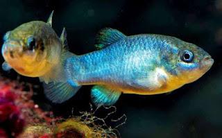 मछलियों के नाम हिंदी में ▷ Fish names