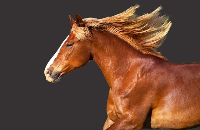 馬の画像:境界線調整ブラシ