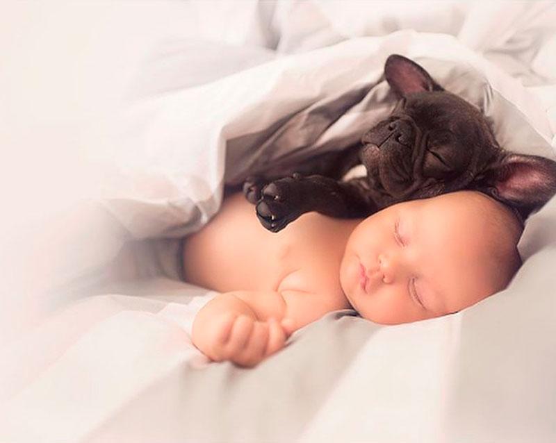 Мальчик и Бульдог - Лучшие Друзья
