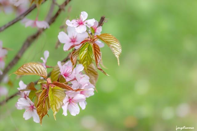 flore, flore des alpes, nature, natural, macro