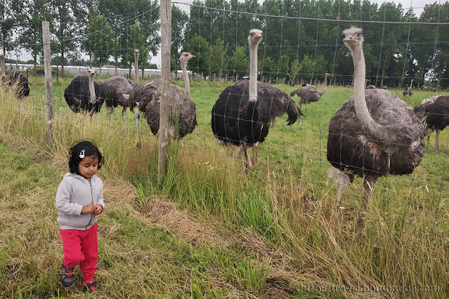 Things to do in Lier with kids Ostrich Farm Struisvogelnest