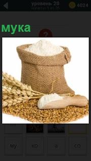 Мешок с мукой и зерна из которых она произведена и колоски выращенные в поле