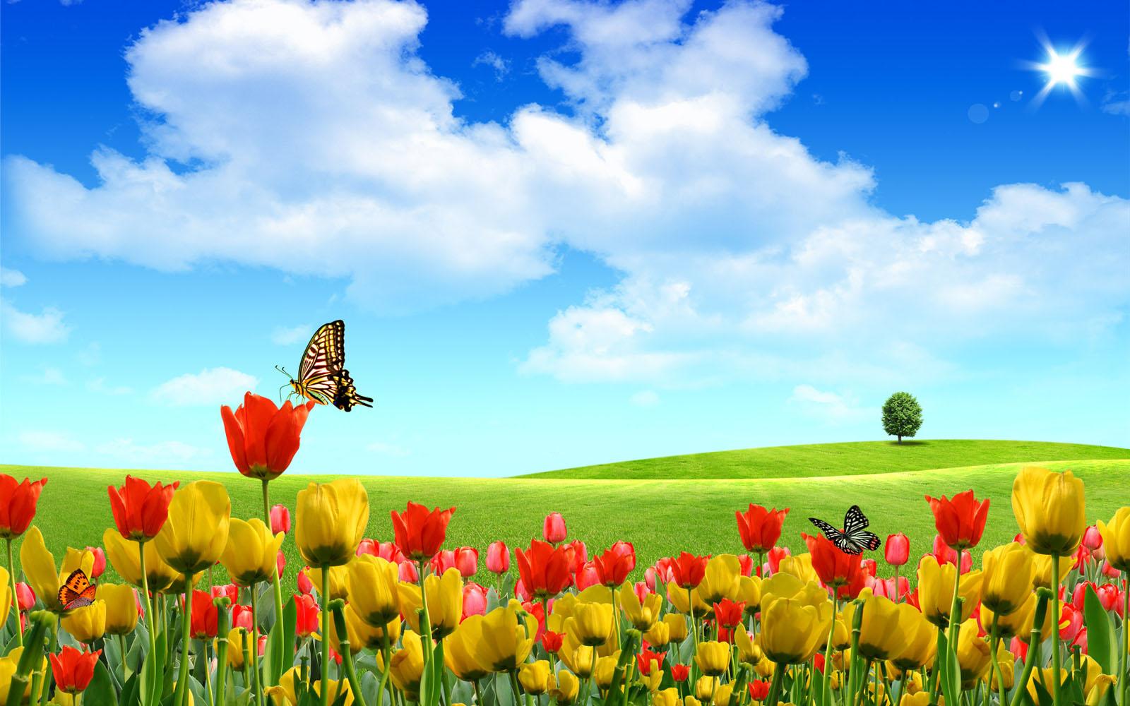 69+ Hình nền thiên nhiên hoa đẹp chất lượng cao Full HD