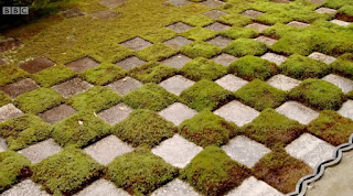 chequerboard moss