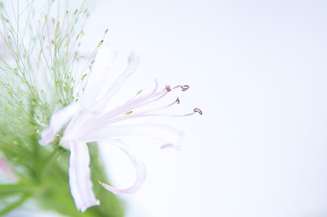 Ynas Design Blog | Rosafarbene Blüten