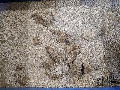 Review Penggunaan Pasir Happy Cat Sand Hari Keempat