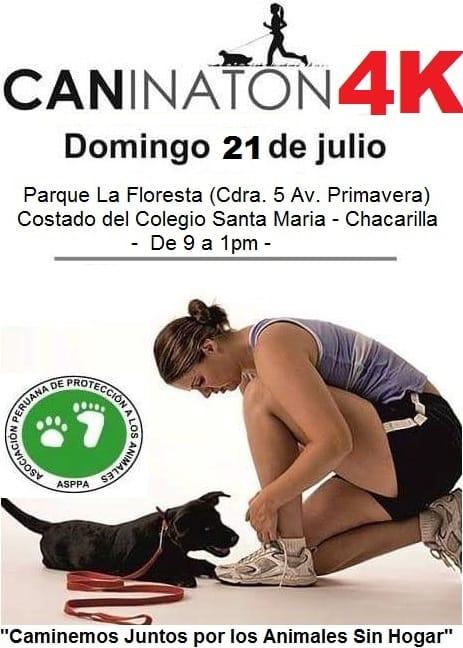 caninaton 4k 2019 por los animalitos sin hogar shurkonrad asppa 2