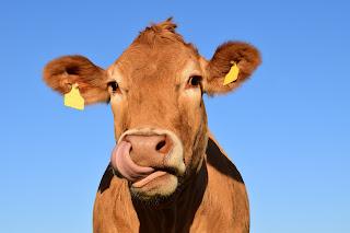 गाय का दूध Cow's Milk