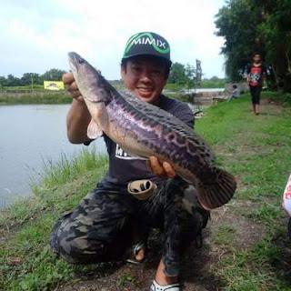 Kolam pemancingan Predator Fishing Pond Sidoarjo