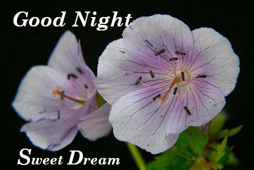 Good Night Rose Images,