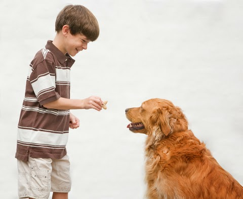 Treinamento Para Cães