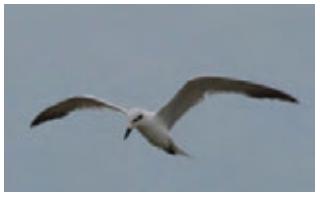 Download 880+ Foto Gambar Burung Yg Sedang Terbang HD Paling Bagus Free