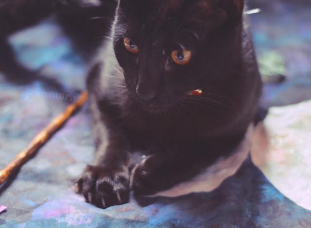 Animais e seus significados mágicos na bruxaria natural e tradicional