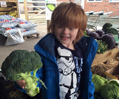 Jack choosing broccoli at Moorhouse Farm Shop near Stannington, Morpeth, Northumberland