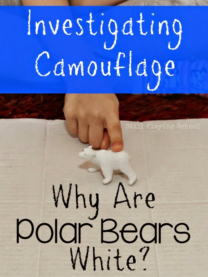 Why Are Polar Bears White A Preschool Investigation