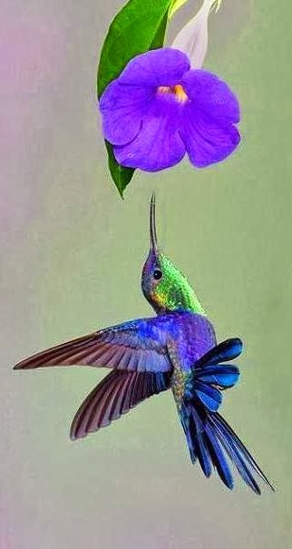 "Hummingbird: ""I'm about to reach to borrow the colors of my wings from this flower food"""