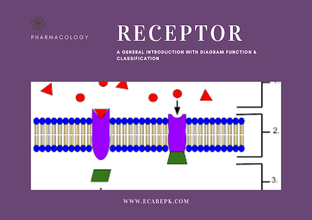 Receptor A General Introduction with Diagrams Function and Classification of Receptor
