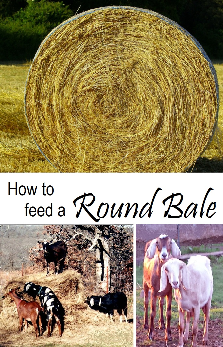 Feed Hay How To Feed A Round Bale Oak Hill Homestead