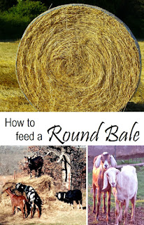 How to feed a round bale to a few goats or horses with as little waste as possible.
