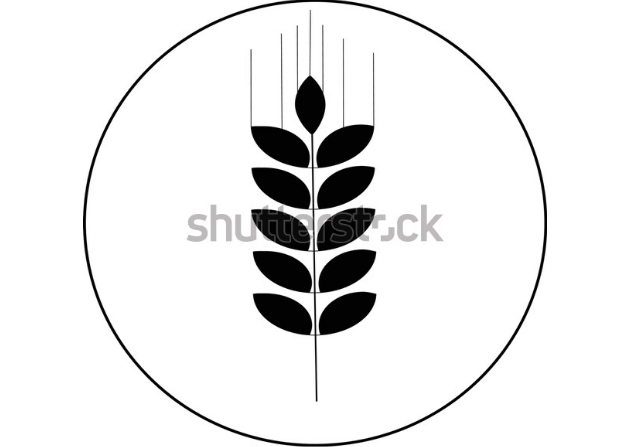 illustration vector wheat vector icon