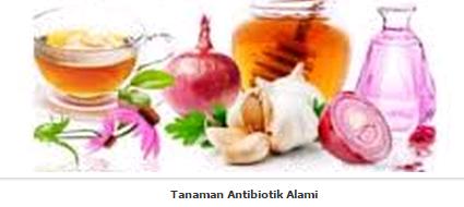 Tanaman Antibiotik