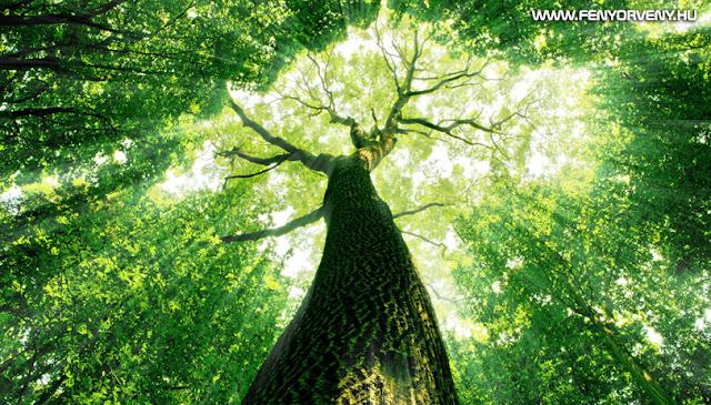 50 csodálatos bölcselet, amire egy idős fa taníthat meg