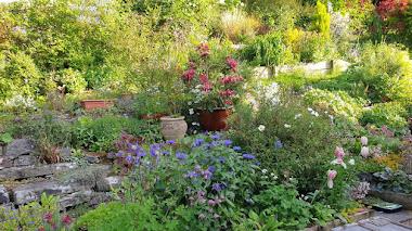 My Chelsea Garden: jardines privados y  premiados