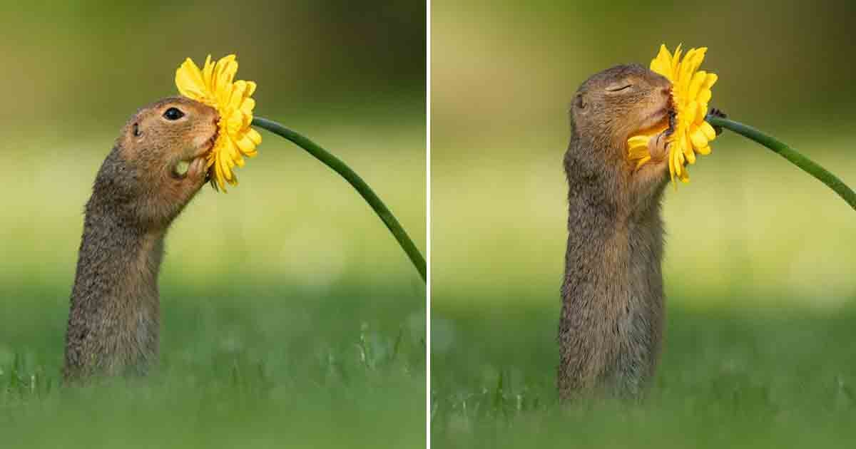 Photographer Captures Moment 'Curious' Squirrel Stops To Smell Flowers