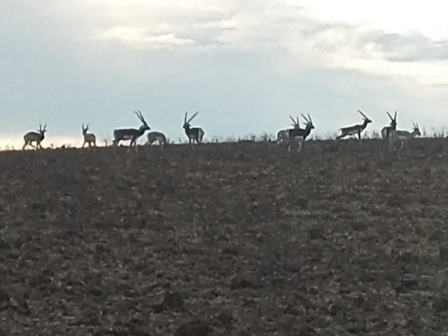 karopani balck deer, dindori jile ke parytan sthal , dindori tourism hindi , dindori tourist place