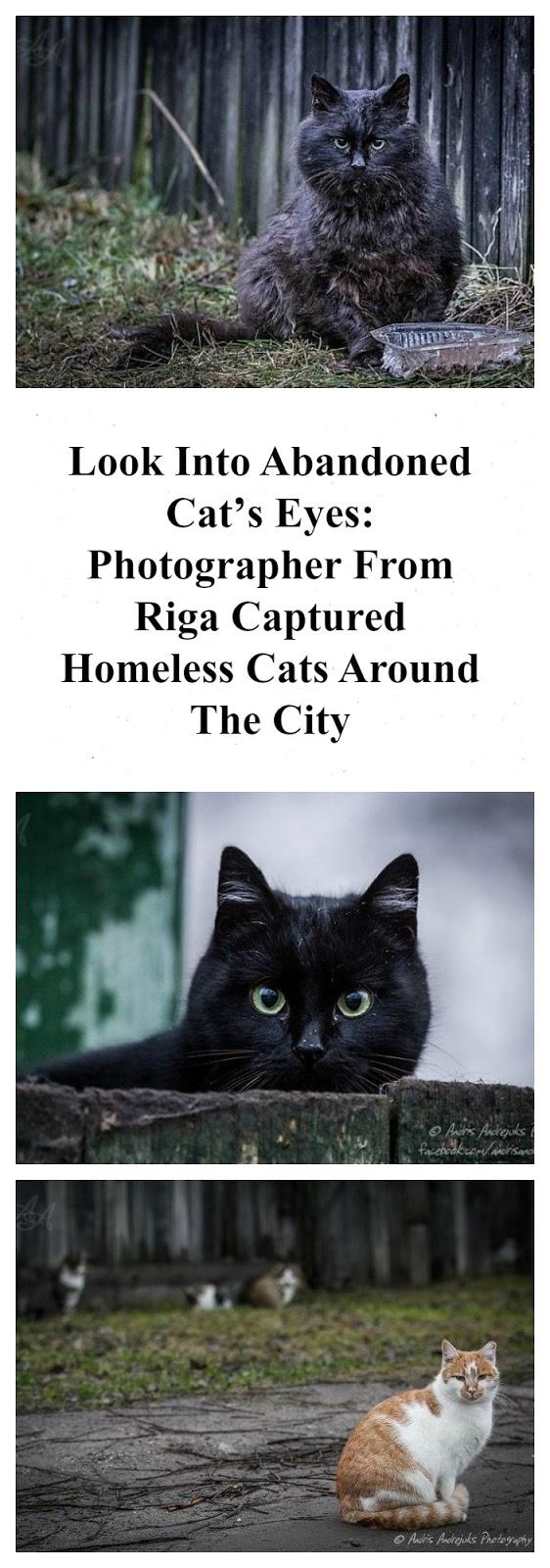cat's eyes photography