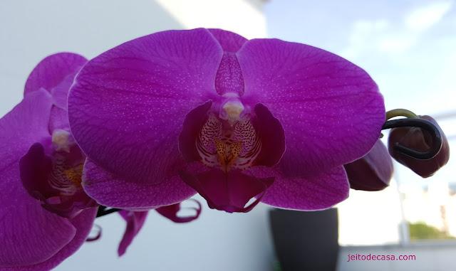 orquidea-para-decorar