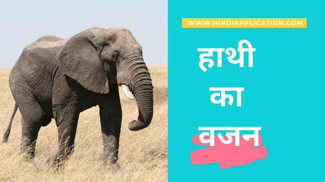 Elephant weight story in Hindi