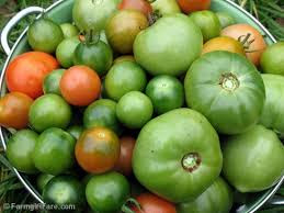 The Amazing Of Health Benefits of Green Tomatoes For Health and Beauty - Healthy T1ps