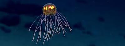 Extraño ser encontrado en el fondo del mar