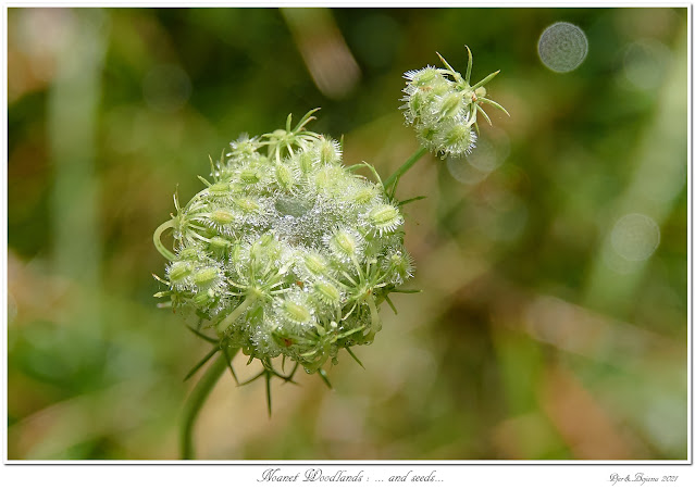 Noanet Woodlands: ... and seeds...