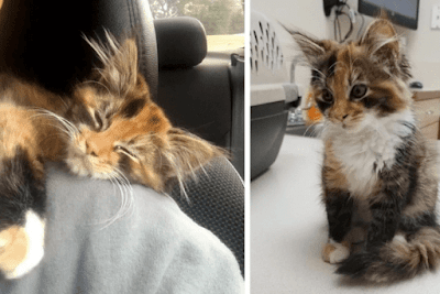 Stray Kitten Walks into Man's Apartment and Decides to Stay and Change His Life