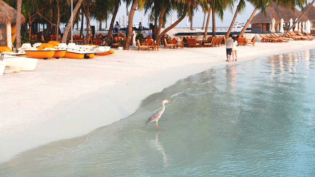 Euriental | fashion & luxury travel | Conrad Rangali, Maldives, George the heron