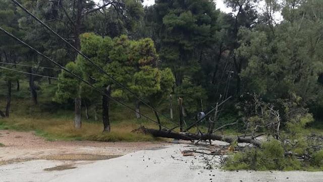 Πτώση δέντρου στο Πόρο προκάλεσε διακοπή της ηλεκτροδότησης