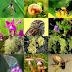 Што е биодиверзитет и зошто е важен за нас?