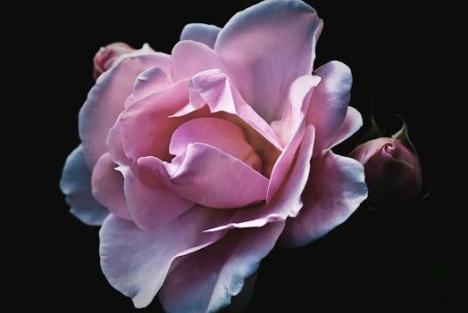 أحلى الورود ورق حائط 13