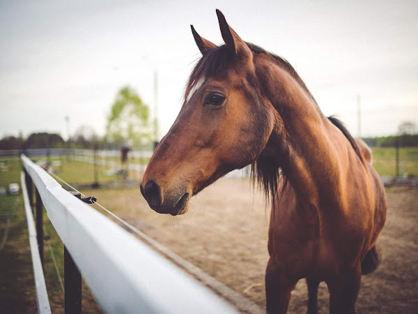 What Really Goes Into Owning A Horse?