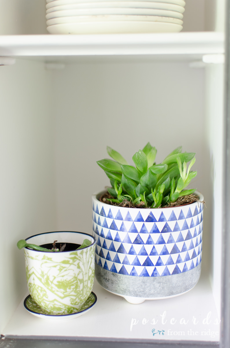 succulents in blue and green post