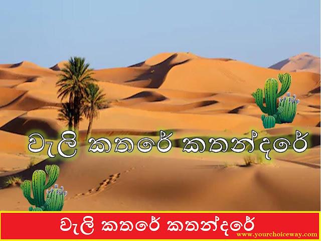 වැලි කතරේ කතන්දරේ 🏜️🏜️🏜️ (The Story Of The Sand Dunes) - Your Choice Way