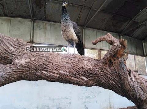 Maitri Garden and zoo in Bhilai, Chhattisgarh updates by www.EChhattisgarh.in