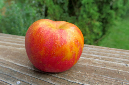 Small apple with distinct red and orange-gold regions on the peel