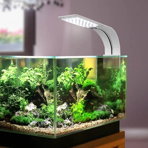 Rekomendasi Lampu LED Hias Aquarium