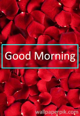 good morning wallpaper hd images photos  download
