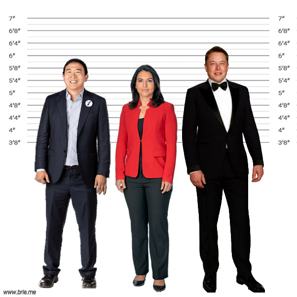 Tulsi Gabbard height comparison with Andrew Yang and Elon Musk